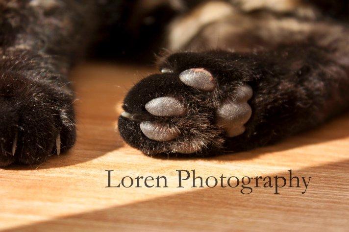 LorenPhotography Mascotas 2