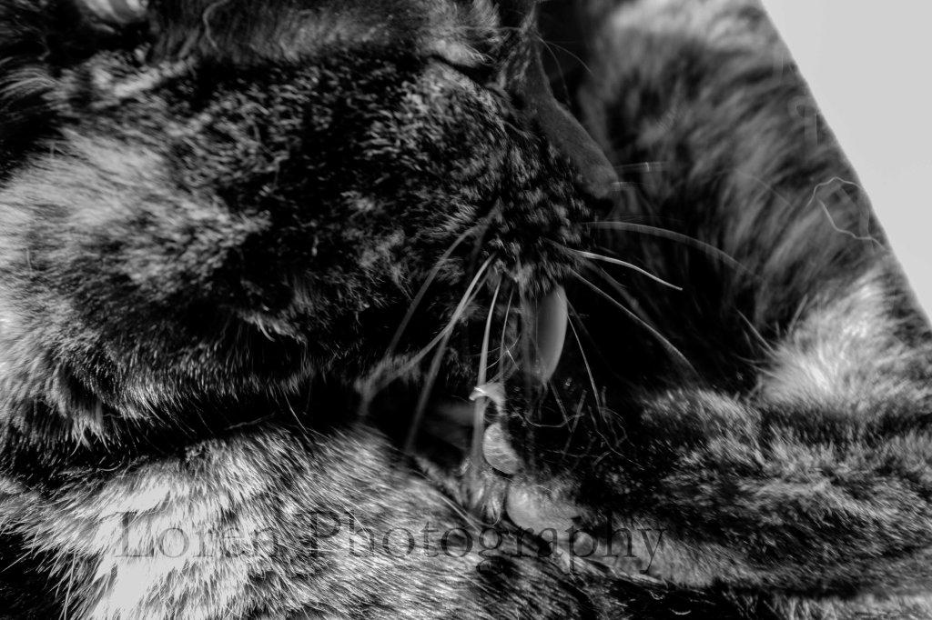 LorenPhotography Mascotas 3