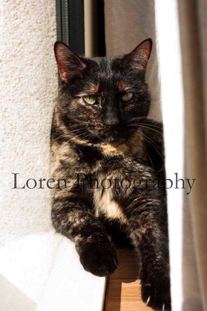 LorenPhotography Mascotas_1