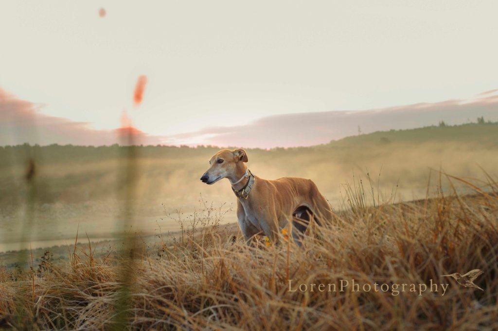 AmaneceCon Leo 13-12-15 -  LorenPhotographyFirma