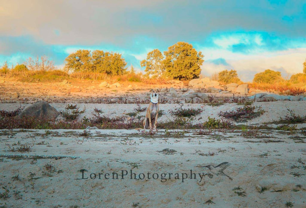 Amanece Con Leo - LorenPhotography (6)