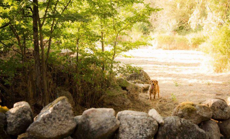 Perro naturaleza campo